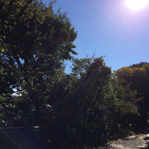 秋晴れ、快晴、東京蚤の市