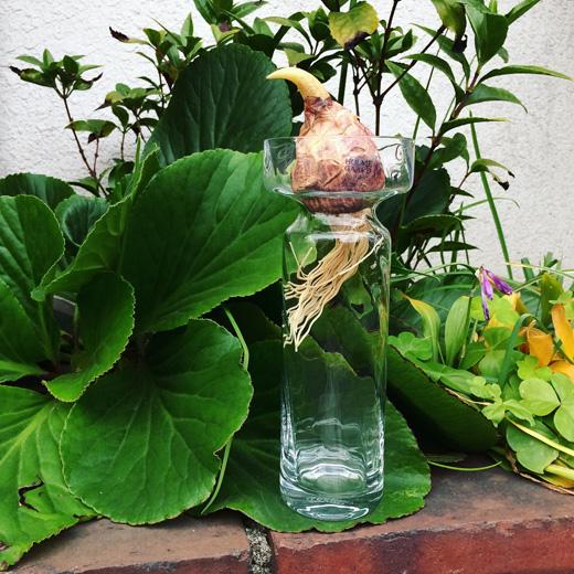 ヒヤシンス水栽培、ヒヤシンスベース、ガラスベース、北欧ヴィンテージ、ホルムガード、花のある暮らし