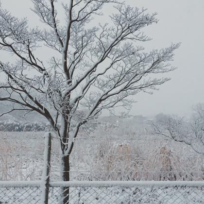 雪景色、白銀の世界、大雪
