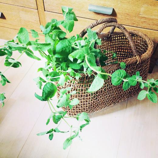 アケビ細工.アケビ籠バック.バスケット.ハンドクラフト.掛け花入.天然素材.vintage.basket.bag.akebi.handcraft