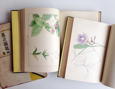 古本、花図鑑、ボタニカルアート、植物図鑑、精密画
