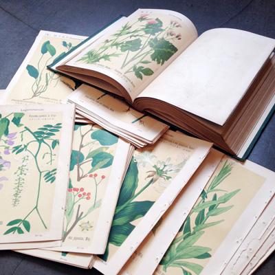 植物図鑑、牧野富太郎、ボタニカルアート
