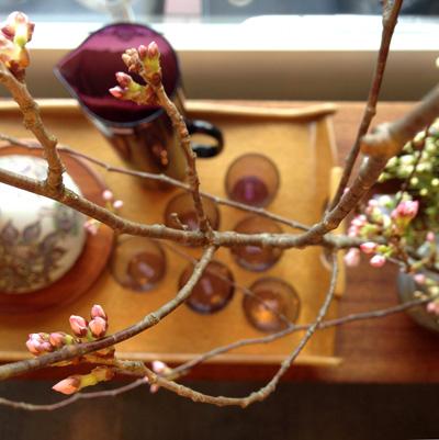 桜、ディスプレイ