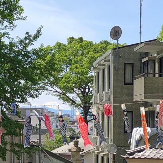 北澤八幡神社、こいのぼり