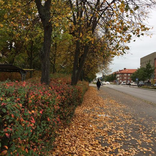 北欧買付、スウェーデン、マルメ、秋、紅葉