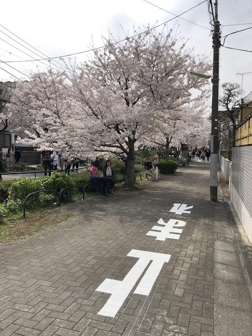 北沢川緑道、桜、2021