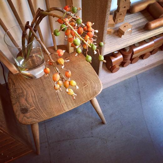 菊の節句に月桃の実、植物のある暮らしshellginger.flowerlife