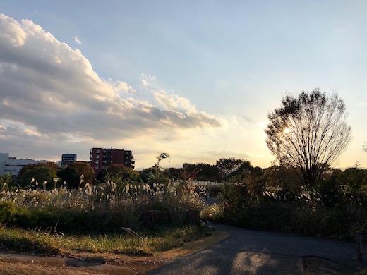 東京蚤の市、昭和記念公園、アンティークマーケット、2019秋